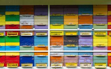 Api terapija in čebelji med